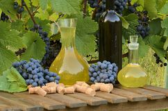 White wine in carafe and red wine in bottle on vineyard background. Royalty Free Stock Images