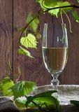 White wine in the glass Royalty Free Stock Photos