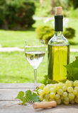 White wine glass and bottle with bunch of grapes Stock Images