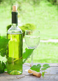 White wine. Glass and bottle in sunny garden Royalty Free Stock Photo