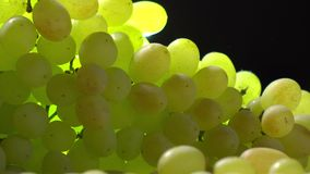 White wine glass and bunch of green grapes. Winery or winemaking concept. 4K close up video