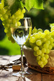 White wine glass, vine and bunch of grapes. On garden table Stock Images