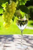 White wine glass and white grape vine Stock Photography