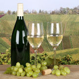 White wine in glasses in the vineyards Stock Photo