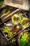 White wine in glasses. Royalty Free Stock Photo