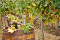 White wine and grape on barrel Royalty Free Stock Photo