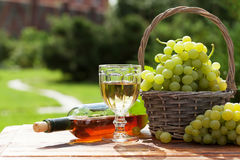 White wine and grape. White wine glass and bottle with basket of grapes in sunny garden Stock Photography