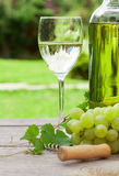 White wine and grape. White wine glass and bottle with bunch of grapes in sunny garden Stock Image