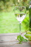 White wine and grape. White wine glass and bottle with bunch of grapes in sunny garden. With copy space Royalty Free Stock Images