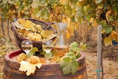 White wine and grape in vineyard Royalty Free Stock Photos