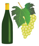 White wine and grapes. White grapes and a bottle of white wine on white background Stock Photo