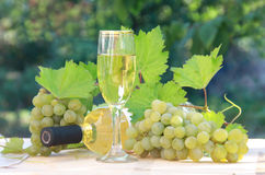 White wine and grapes composition Royalty Free Stock Photo