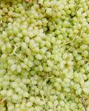 White wine grapes Stock Photos