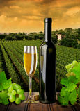 White wine and grapes Stock Image