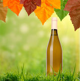 White wine on grass background Royalty Free Stock Images