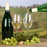 White wine pouring from bottle into wine glass in vineyards Stock Photo