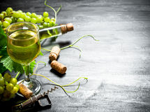 White wine with a vine. Royalty Free Stock Photo