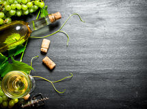 White wine with a vine. Stock Photos