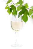 White wine and vine Royalty Free Stock Image