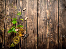 White wine in the vine. Royalty Free Stock Photo