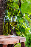 White wine in vineyard Royalty Free Stock Images
