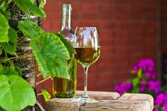 White wine in vineyard Royalty Free Stock Photography