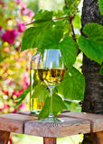 White wine in vineyard Royalty Free Stock Photos