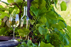 White wine in vineyard Stock Photos