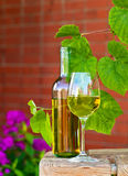 White wine in vineyard Royalty Free Stock Photo