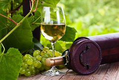 White wine in vineyard Stock Images