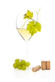 White wine in wine glass. Royalty Free Stock Photography