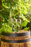 White wine with wineglass and grapes on garden terrace Stock Photography
