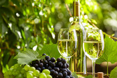 White wine with wineglass and grapes on garden terrace Royalty Free Stock Photography