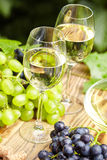 White wine with wineglass and grapes on garden terrace Stock Images