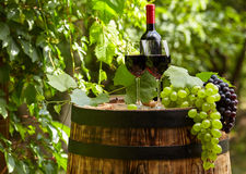 White wine with wineglass and grapes on garden terrace. Bottle of white wine with wineglass and grapes on garden terrace Stock Photo