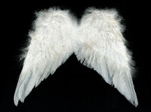 White wings. Image of white wings over black background Royalty Free Stock Photos