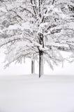 White winter Royalty Free Stock Image