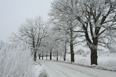 White winter Stock Photography