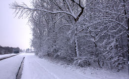 White winter Royalty Free Stock Photos