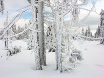 White Winter stock image