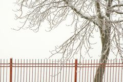 White winter background Stock Image