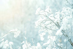 White winter background. Royalty Free Stock Photo