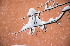 White winter background with snowy branches. White winter background with a snowy branches Royalty Free Stock Photos