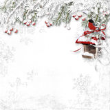 White winter background with snowy red berries, bullfinch and bi Stock Image