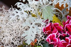 Free White Winter Flowers, Natural Background, Gardens Stock Photography - 103187722
