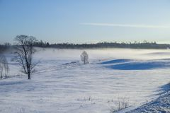 White winter, fog and trees. Silent and sunny morning. 2012 Royalty Free Stock Photo