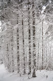 White winter in forest Stock Images