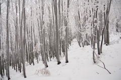 White winter in forest Royalty Free Stock Images