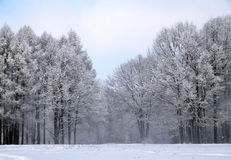 White winter forest 2. The trees covered by a snow in the winter wood Stock Images