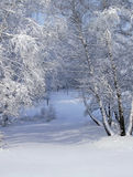 White winter forest Stock Photography